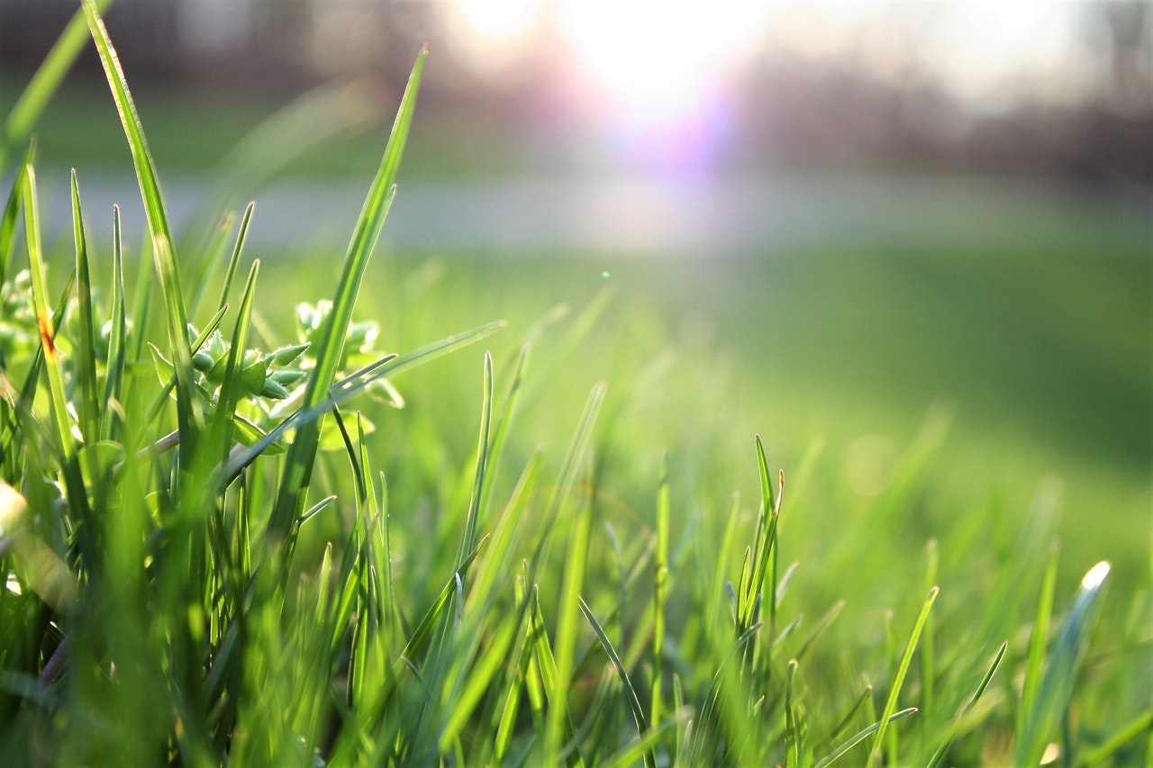 WATER CORPORATION OF WA PROVIDES INFORMATION ON ESTABLISHING A NEW LAWN.