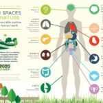 THE GREEN SPACE ALLIANCE